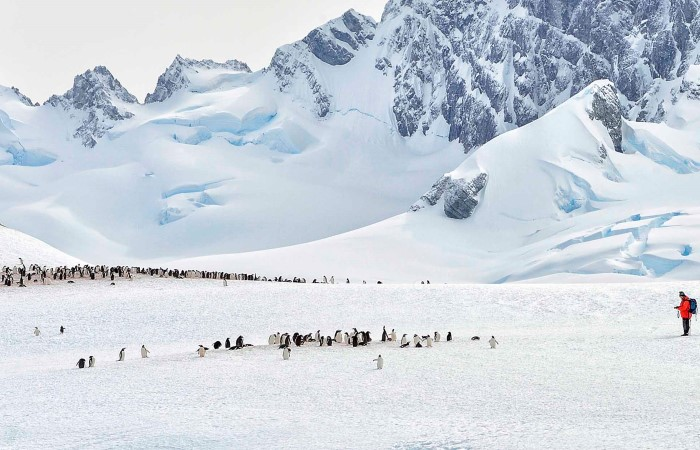 Among penguins on Cuverville Island.