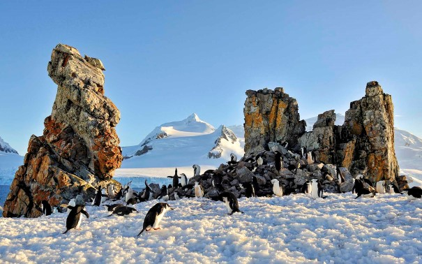 A penguin colony on sunny Half Moon Island