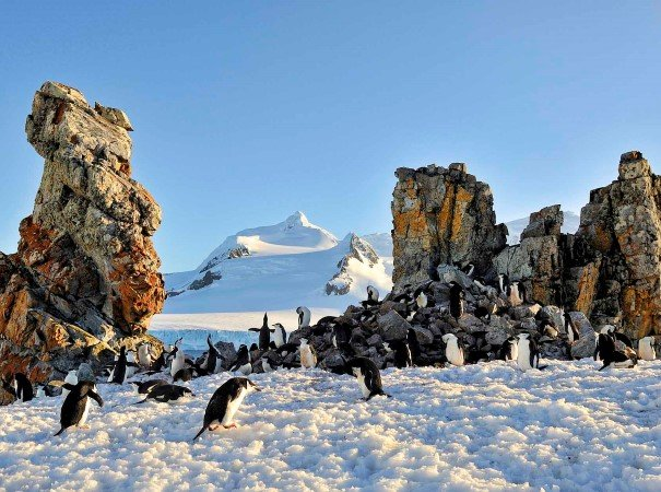 A penguin colony on Half Moon Island. Come ashore to meet the penguins in their lively colonies or enjoy ice-cruising to spot for whales and seals in spectacular surroundings.