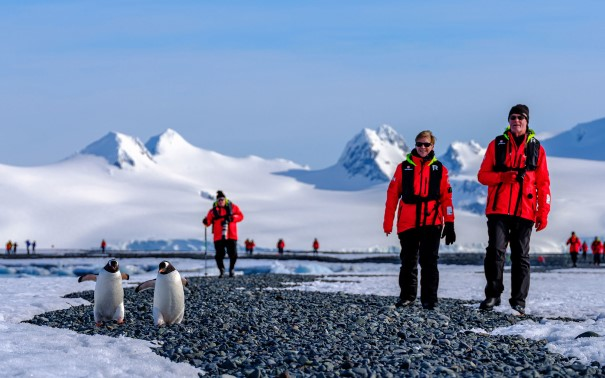 People walking in red expedition jackets next to penguins.