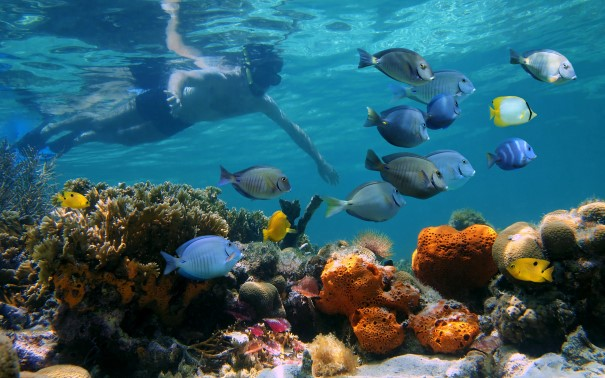 Discover Panama´s first National Marine Park.