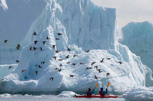 Kayaking and birdwatching surrounded by icebergs near Camp Frieda