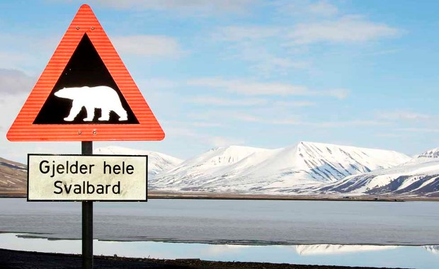 Watch out - there are more polar bears than humans on the Svalbard archipelago!