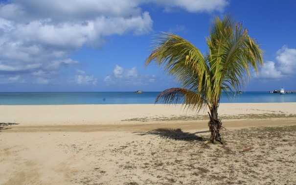 A group of palm trees on a sandy beach next to the ocean