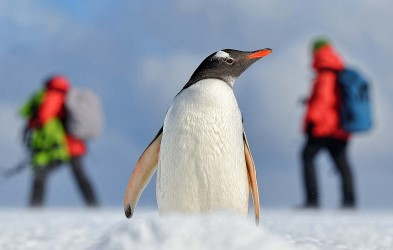 Smell, hear and see the rich penguin colonies, watch whales break the surface and always be prepared for the unexpected.
