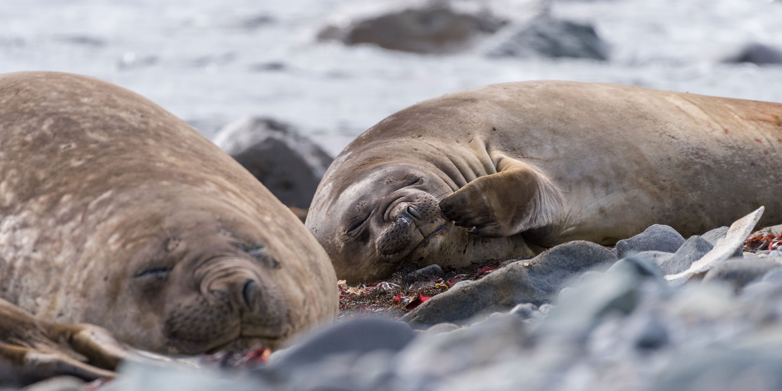 What animals live in Antarctica