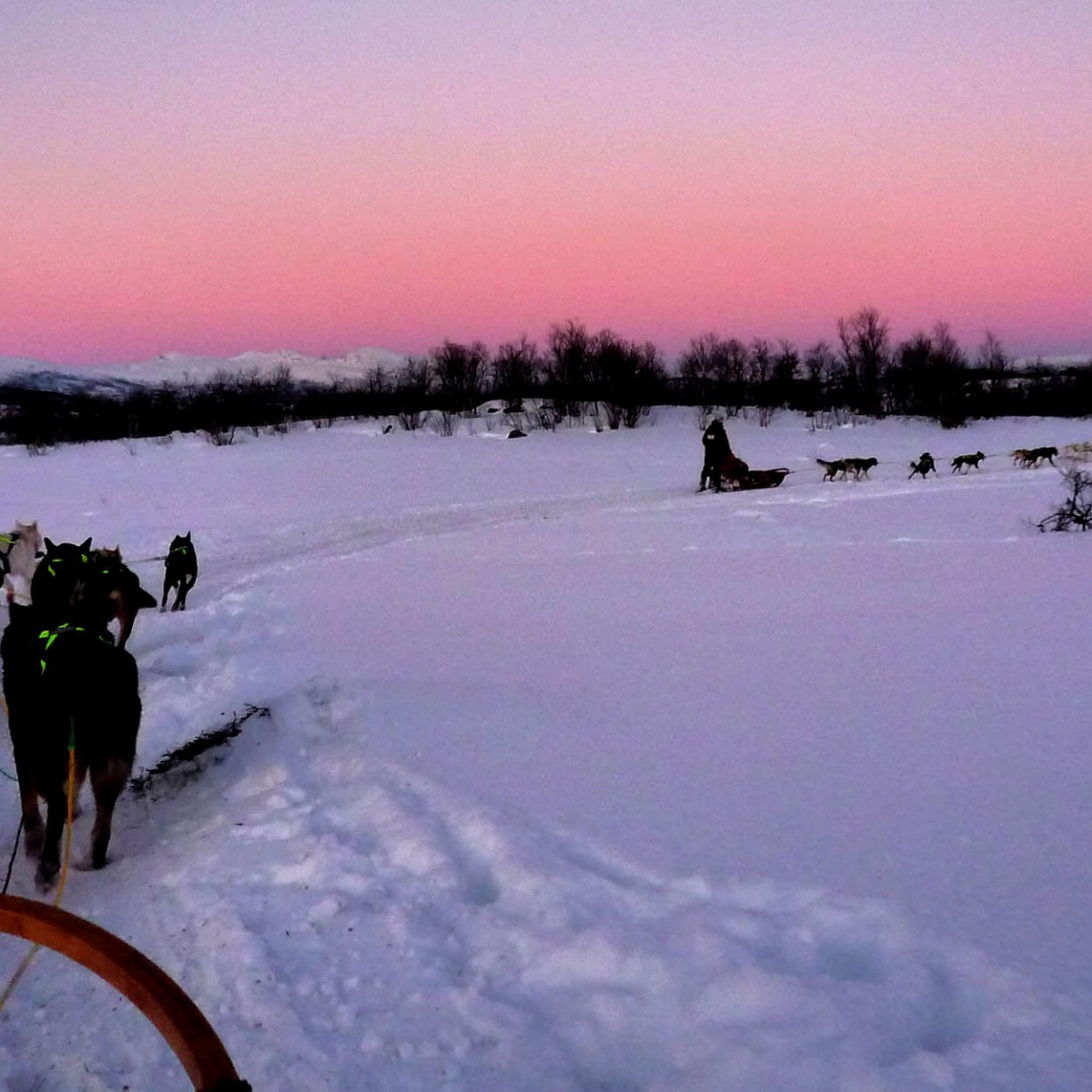 Dog Sledding In Troms 248 Norwegian Winter Landscape With