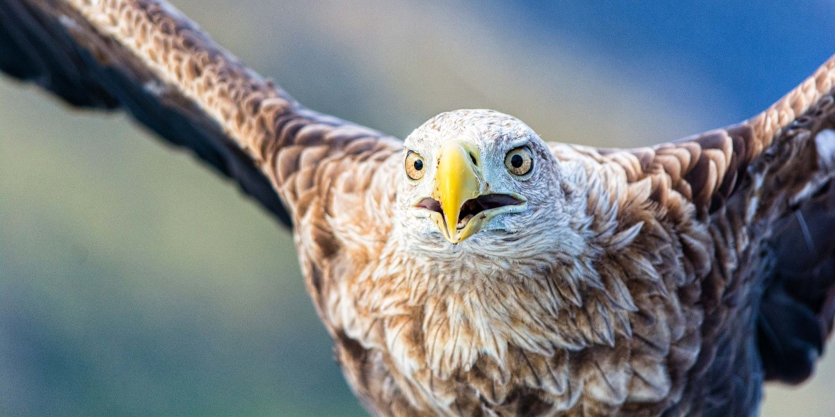 Norway Excursions Sea Eagle Safari Hurtigruten Uk