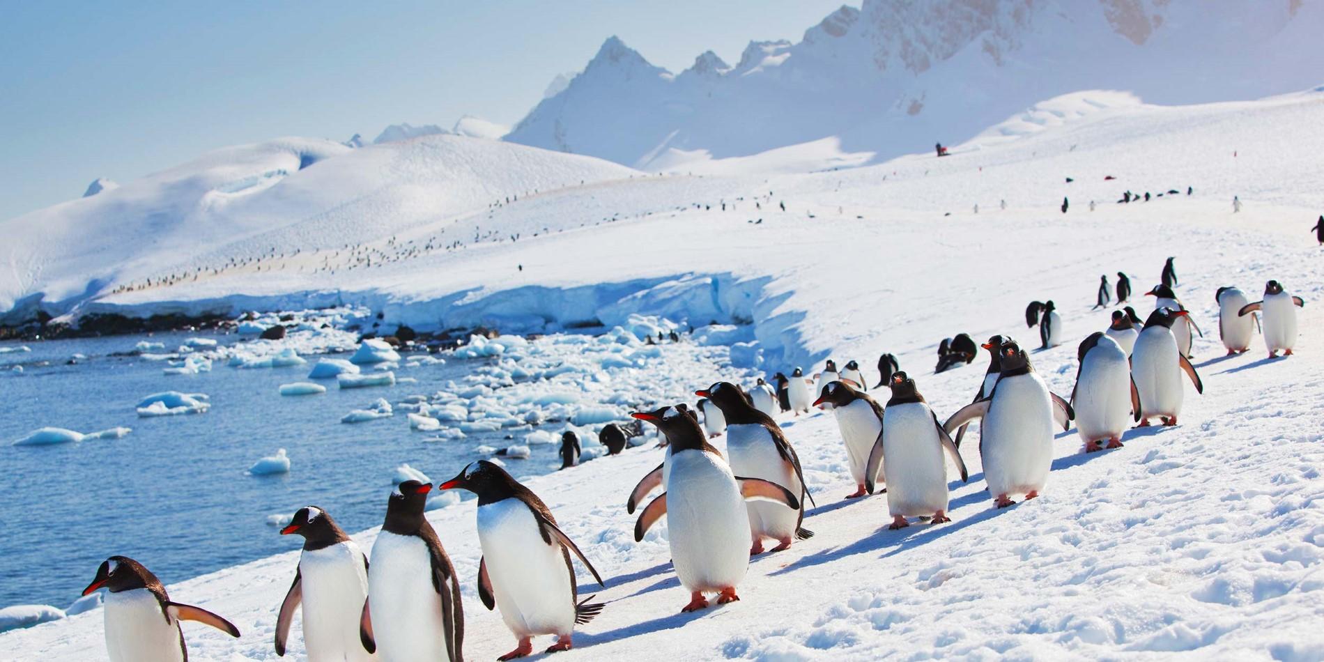 Image result for antarctica penguins