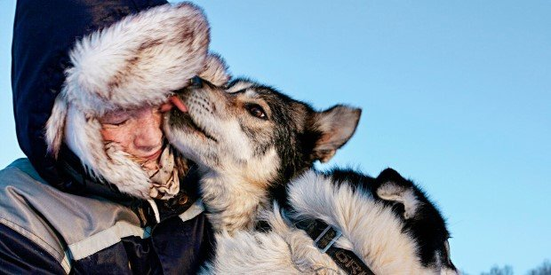 On our dog-sledge adventures, huskies eagerly transport you across the frozen Arctic landscape.