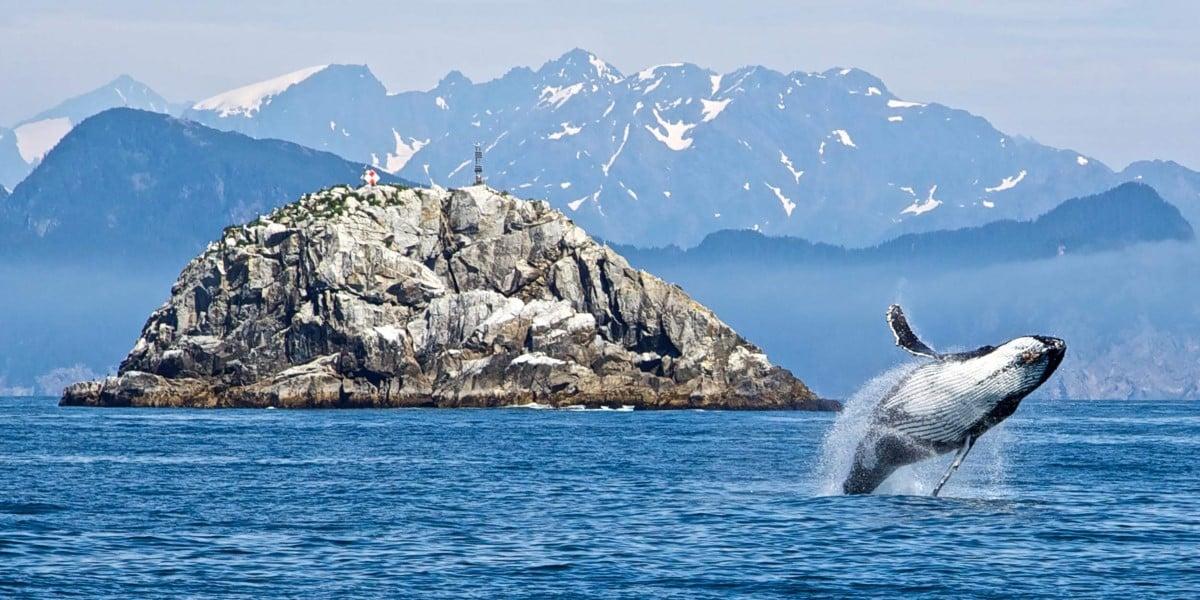 Cruise To Alaska And Canada The Aleutian Islands And Brown Bears Hurtigruten Uk
